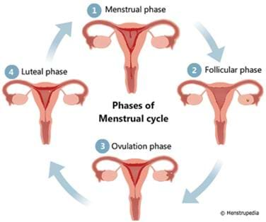 Menstral phases